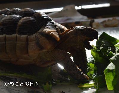 DSC_0638-t.jpg