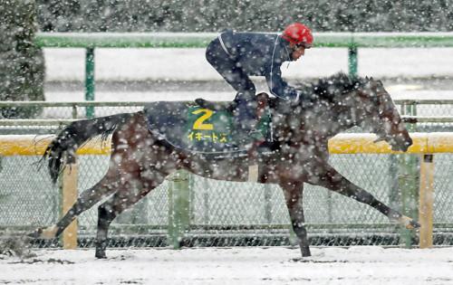 【ジャパンカップ】自称上級者がいかにも買いそうな馬、ヘタクソが買いそうな馬