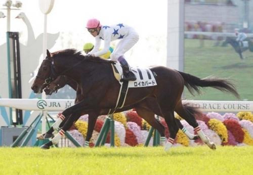 【競馬】サトノダイヤモンドの正式ライバルロイカバード(2億5千万)さんの現在wwwwwwwwwww