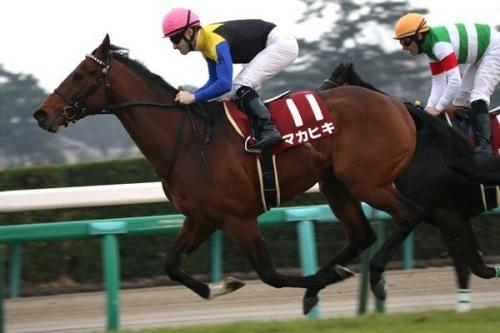【競馬】マカヒキがドバイシーマC(2410m)に登録 ドバイターフ(1800m)には登録せず