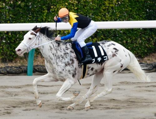 【競馬】ブチコ引退