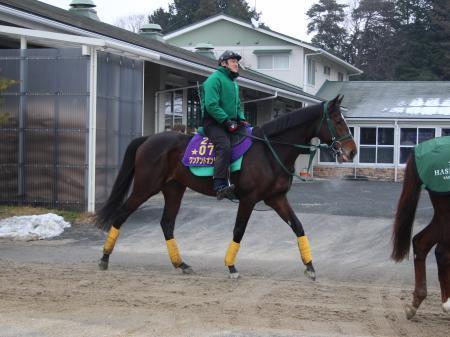 【競馬】低人気馬が馬券内にくるパターンには主に3種類ある。この中でもっとも馬券になりやすいタイプは?