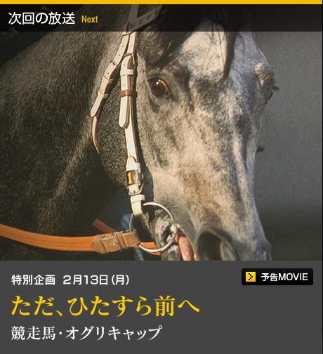 【競馬ネタ】プロフェッショナル 仕事の流儀 オグリキャップ