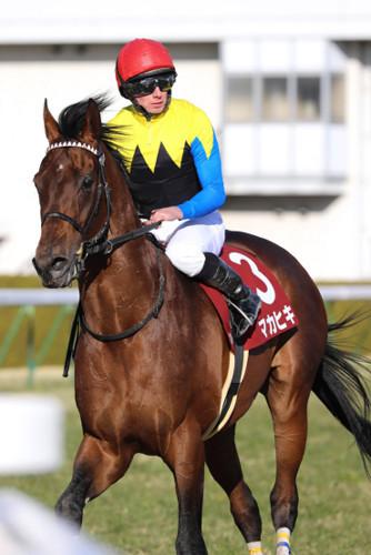 【競馬】マカヒキ、大阪杯はルメールが騎乗