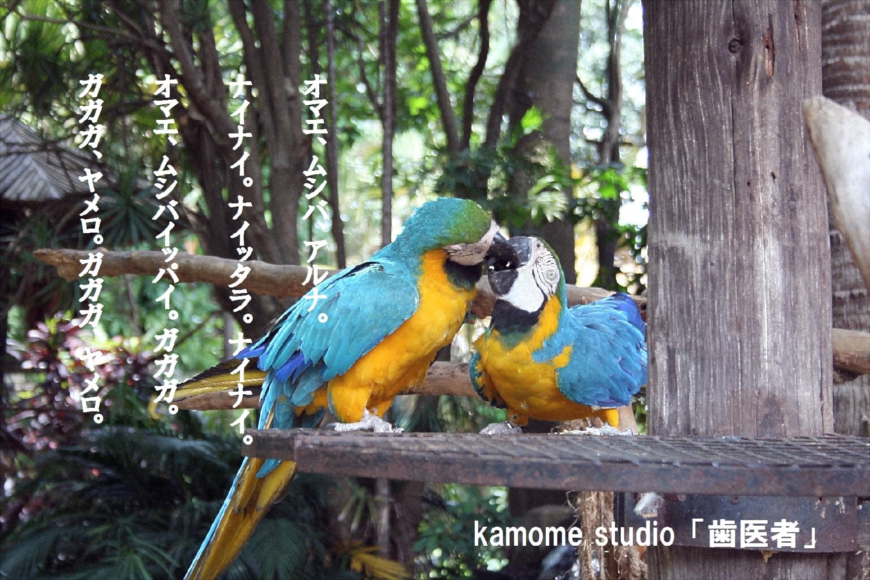 macaw-parrots-1785330_1920-2