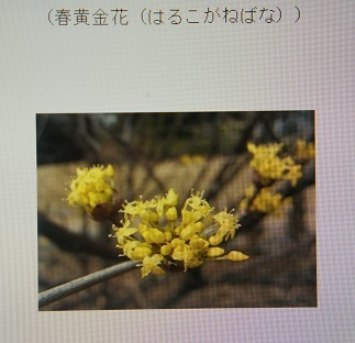 DSC04508.jpg