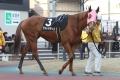 170102 ゴールデンホース賞-04