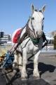 170102、0103 ばん馬とのふれあい-01