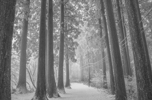 snowtrail1.jpg