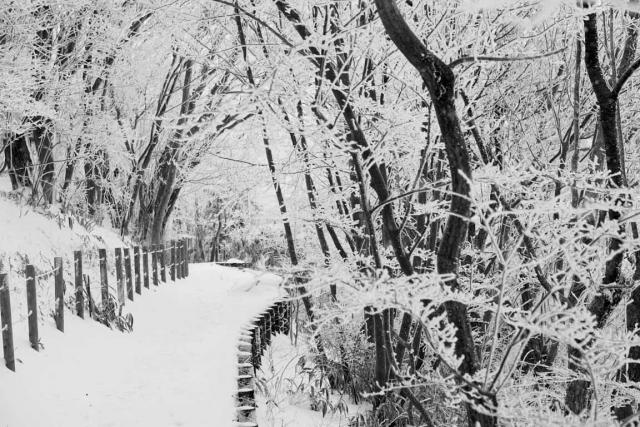snowtrail2.jpg