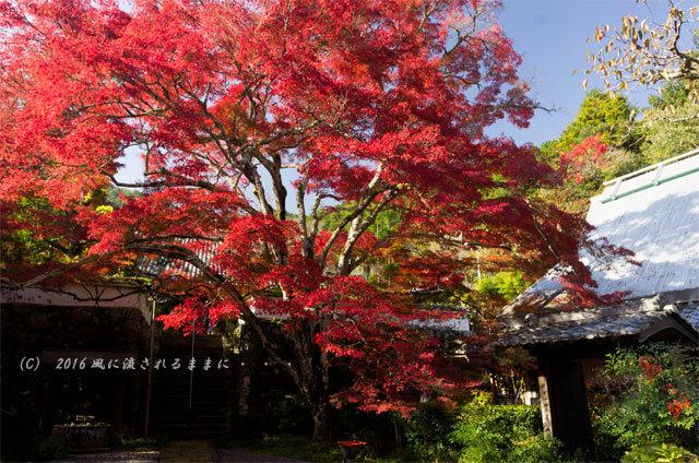 2016年11月12日撮影 京都亀岡・神蔵寺 紅葉1