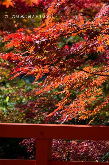 2016年11月12日撮影 京都亀岡・神蔵寺 紅葉5