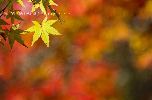 2016年11月12日撮影 京都亀岡・神蔵寺 紅葉6