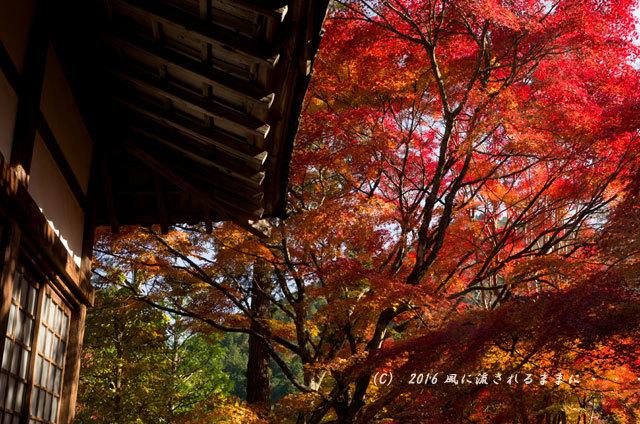 2016年11月12日撮影 京都亀岡・神蔵寺 紅葉3