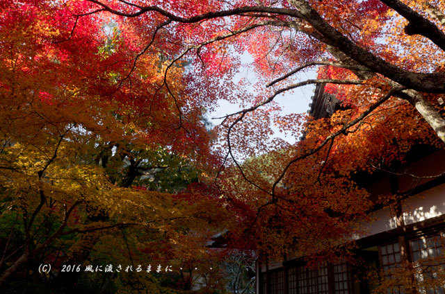 2016年11月12日撮影 京都亀岡・神蔵寺 紅葉8