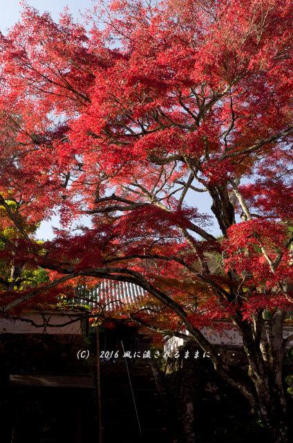 2016年11月12日撮影 京都亀岡・神蔵寺 紅葉9