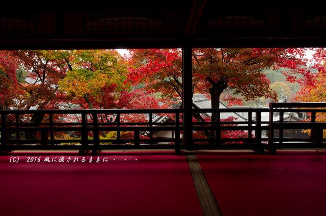 2016年11月19日撮影 京都・柳谷観音 楊谷寺 上書院から見た紅葉8