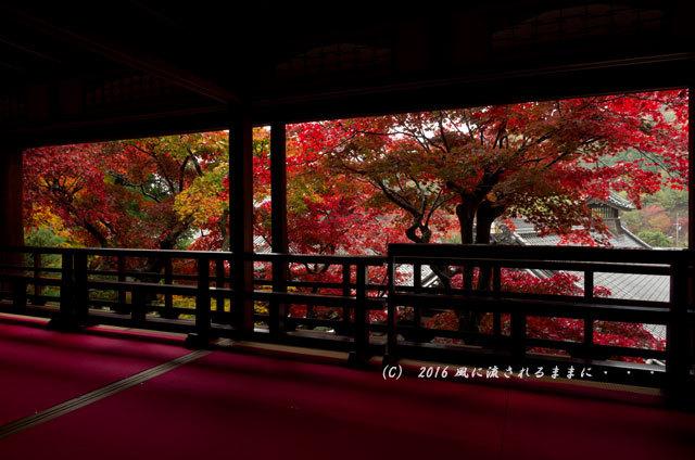 2016年11月19日撮影 京都・柳谷観音 楊谷寺 上書院から見た紅葉9