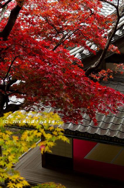 2016年11月19日撮影 京都・柳谷観音 楊谷寺 上書院から見た紅葉10