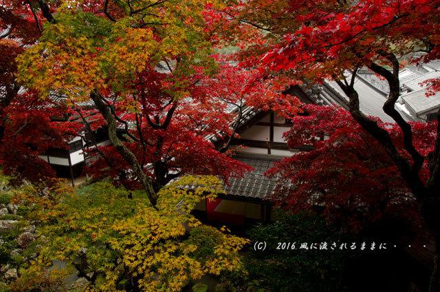 2016年11月19日撮影 京都・柳谷観音 楊谷寺 上書院から見た紅葉11