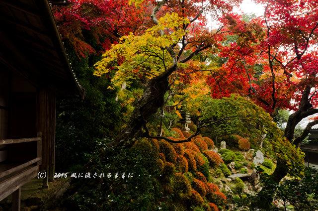 2016年11月19日撮影 京都・柳谷観音 楊谷寺 上書院から見た紅葉12