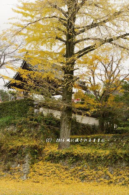 2016年11月20日撮影 大阪・西恩寺 紅葉11