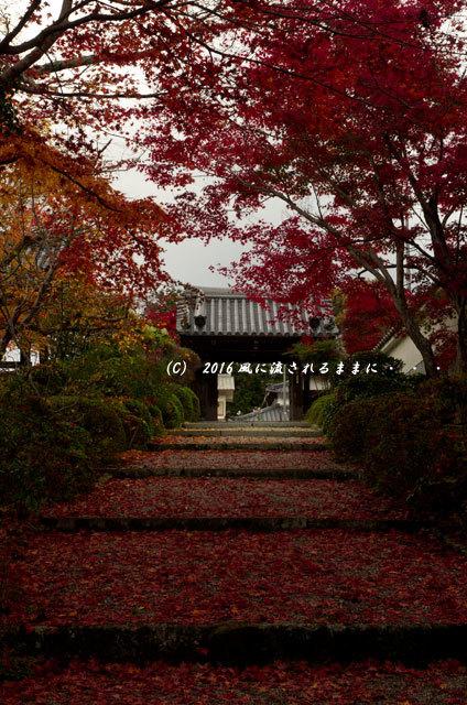 2016年11月20日撮影 大阪・西恩寺 紅葉2