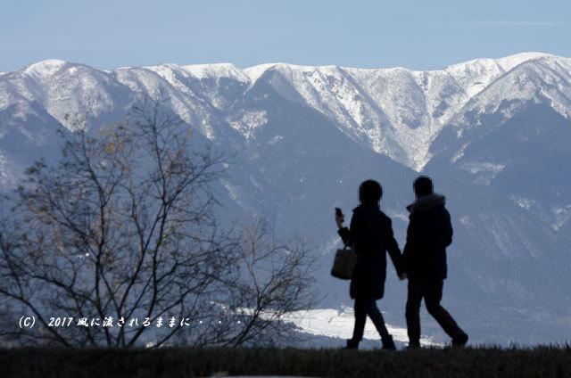 第一なぎさ公園 菜の花(カンザキナバナ)と雪の比良山2