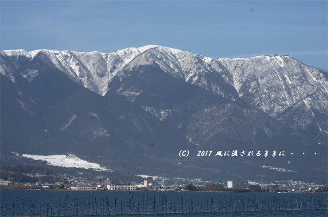 第一なぎさ公園 菜の花(カンザキナバナ)と雪の比良山4