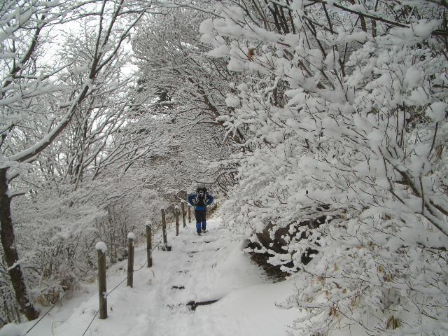 南面の道、雪の道