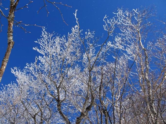 帰りの霧氷の森1