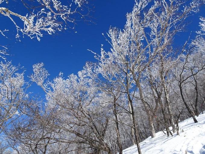 帰りの霧氷の森2