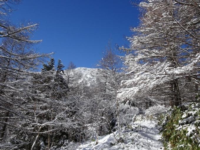 落葉松に霧氷