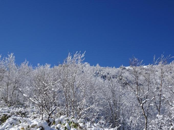 霧氷と青空1