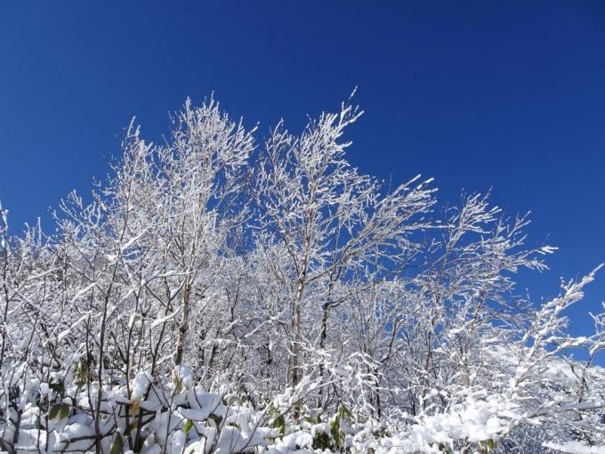 霧氷と青空2