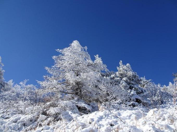 霧氷と青空3
