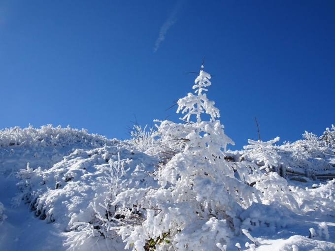 霧氷と青空4