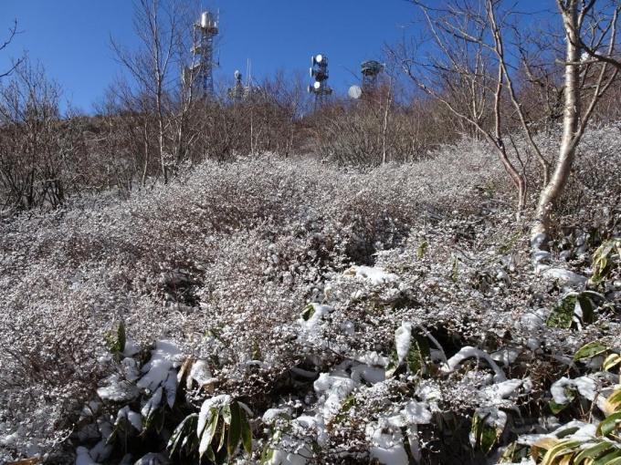 雪の花と鉄塔群