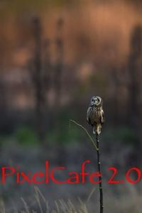 2017 年賀状