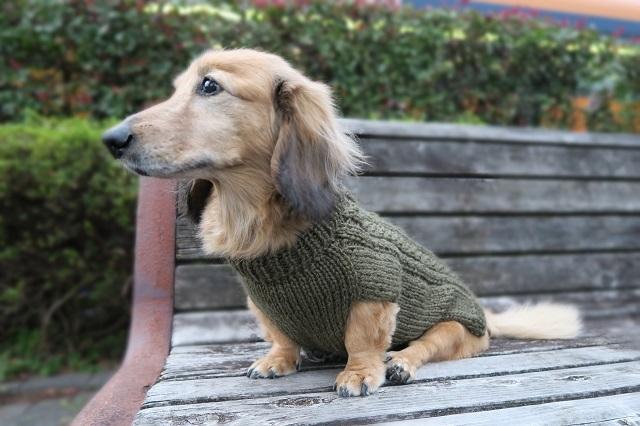 ハンくんのセーター1