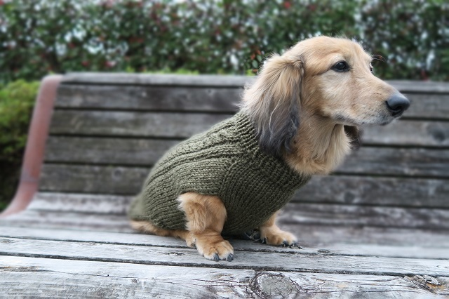 ハンくんのセーター2