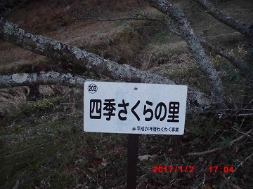 さくらa20170102