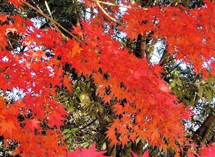 紅葉 (4)