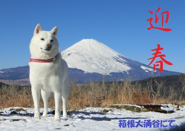 富士山迎春