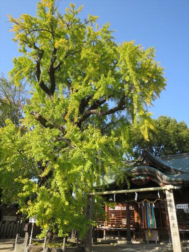 白山神社へ初詣+α-03
