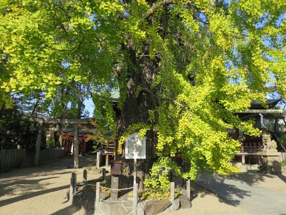 白山神社へ初詣+α-04
