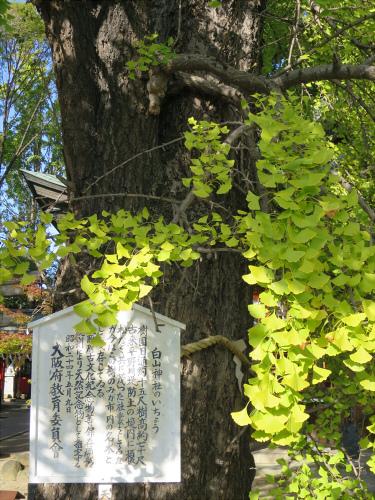 白山神社へ初詣+α-05