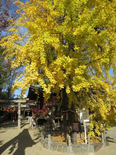 白山神社へ初詣+α-09