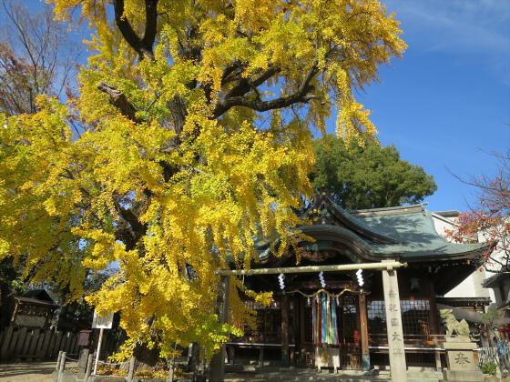 白山神社へ初詣+α-11