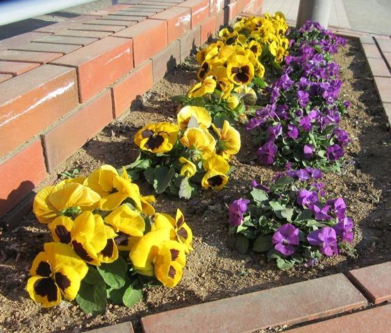 花がら摘みを終えてきれいになった花壇